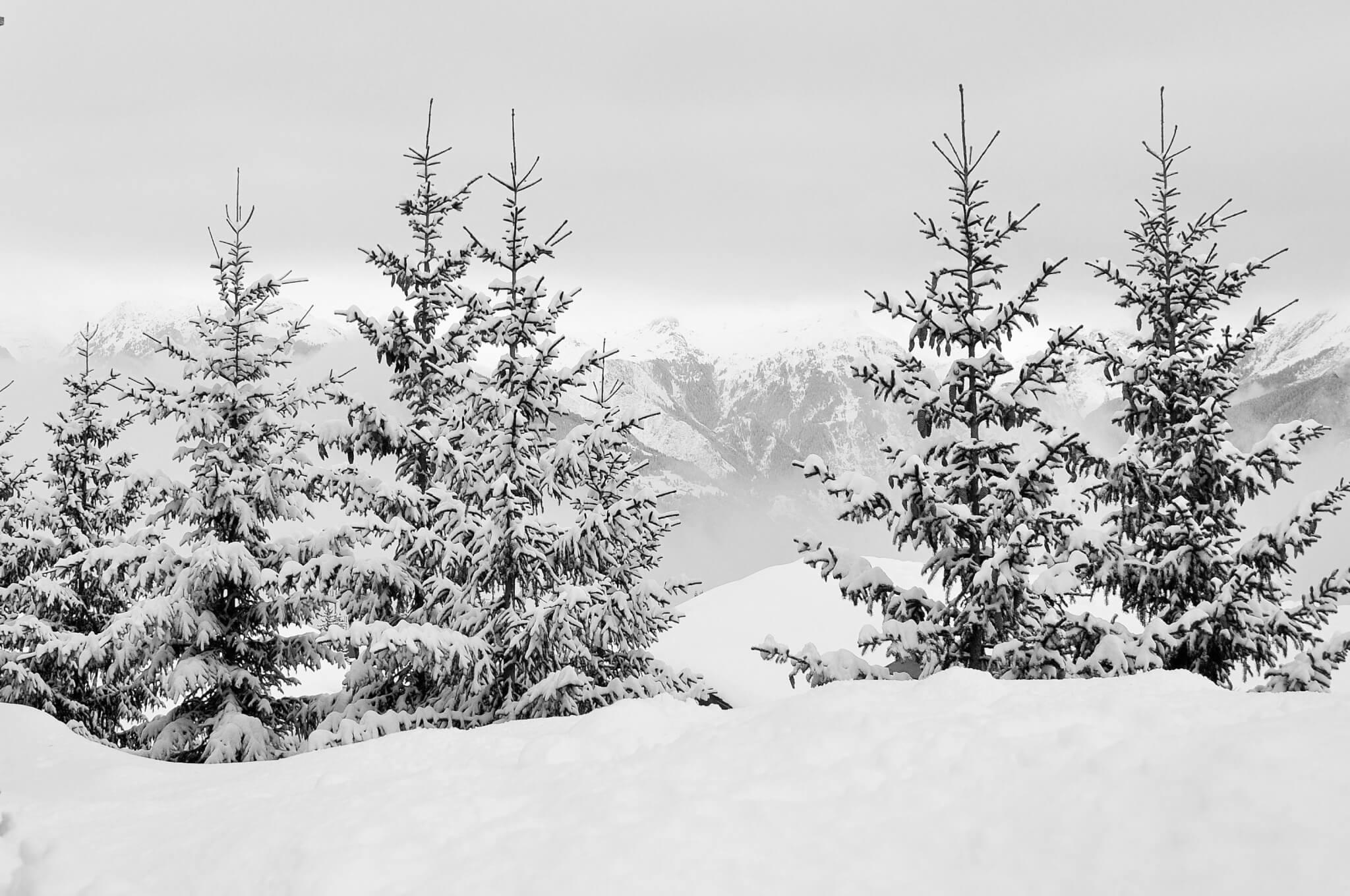 Paysage en neige